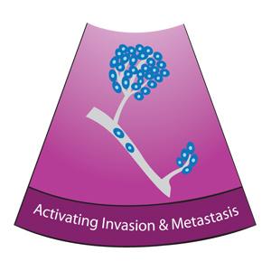 MetastasisSlice